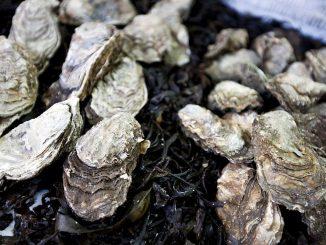 Wegen des Nachweises von Norviren und einer deshalb erfolgten behördlichen Anordnung werden Austern aus der Normandie zurückgerufen. (Foto: Stockunlimited)